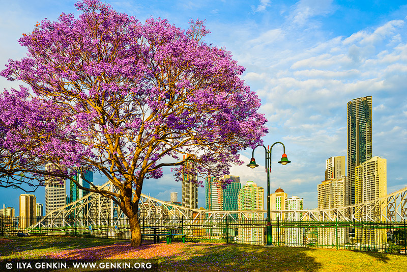 australia stock photography | Brisbane City in Spring, Wilsons Outlook Reserve, Brisbane, QLD, Australia, Image ID AU-BRISBANE-0006