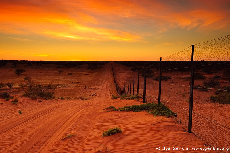 australia stock photography | Dingo Fence near Cameron Corner at Sunrise, Cameron Corner, NSW/QLD/SA, Australia, Image ID CAMERON-CORNER-NSW-QLD-SA-0005