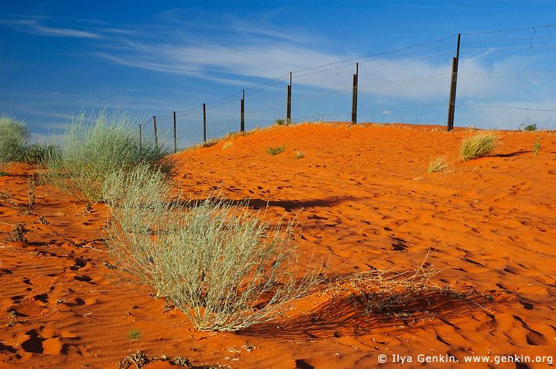 australia stock photography | Dingo Fence near Cameron Corner, Cameron Corner, NSW/QLD/SA, Australia, Image ID CAMERON-CORNER-NSW-QLD-SA-0007