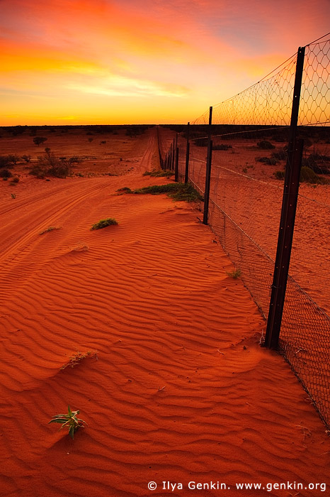 australia stock photography | Dingo Fence near Cameron Corner at Sunrise, Cameron Corner, NSW/QLD/SA, Australia, Image ID CAMERON-CORNER-NSW-QLD-SA-0008