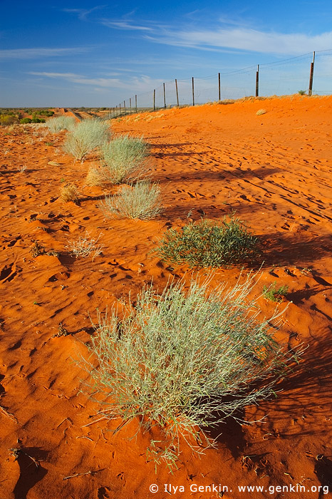 australia stock photography | Dingo Fence near Cameron Corner, Cameron Corner, NSW/QLD/SA, Australia, Image ID CAMERON-CORNER-NSW-QLD-SA-0012