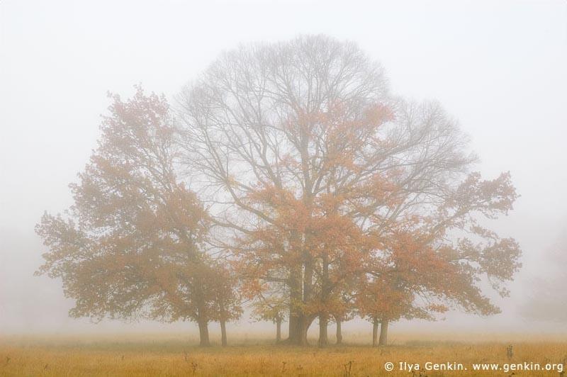 australia stock photography | Trees in Mist, Gostwyck, Uralla, NSW, Australia, Image ID AU-GOSTWYCK-0002