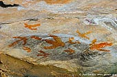 australia stock photography | Aboriginal Rock Art Paintings at Gulgurn Manja Shelter, Grampians National Park, Victoria (VIC), Australia, Image ID GULGURN-MANJA-SHELTER-0006. Close-up stock image of the paintings at Gulgurn Manja - Aboriginal Rock Art Site in the Grampians National Park (Gariwerd), Victoria (VIC), Australia.