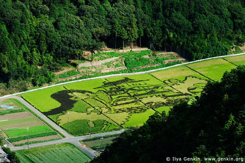 japan stock photography | Picture on a Rice Field. View from Mount Shosha., Hyogo Prefecture, Kansai region, Honshu Island, Japan, Image ID JPHJ0059