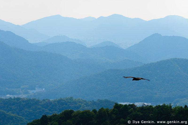 Eagle Flying Above Hills Near Himeji. View from Mount Shosha. Hyogo Prefecture, Kansai region, Honshu Island, Japan