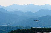 japan stock photography | Eagle Flying Above Hills Near Himeji., View from Mount Shosha., Hyogo Prefecture, Kansai region, Honshu Island, Japan, Image ID JPHJ0066.
