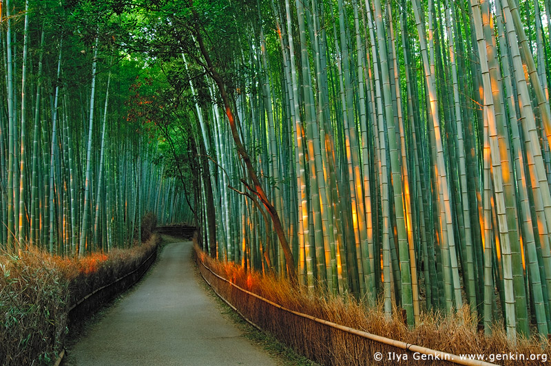 japan stock photography | First Light at Arashiyama Bamboo Grove, Arashiyama, Kyoto, Kansai, Honshu, Japan, Image ID JP-KYOTO-0002