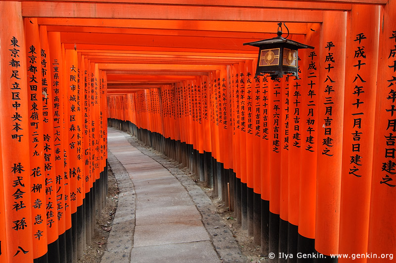 Japan stock photography | Ten Thousands of Red Gates (Torii) are in Fushimi Inari Shrine, Kyoto, Japan