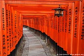 japan stock photography | Ten Thousands of Red Gates (Torii) are in Fushimi Inari Shrine, Kyoto, Kansai, Honshu, Japan, Image ID JP-KYOTO-0003.