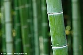 japan stock photography | Bamboo Trees at Arashiyama Bamboo Grove, Arashiyama, Kyoto, Kansai, Honshu, Japan, Image ID JP-KYOTO-0004.