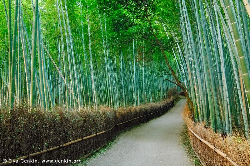 japan stock photography | Arashiyama Bamboo Grove, Arashiyama, Kyoto, Kansai, Honshu, Japan, Image ID JP-KYOTO-0006