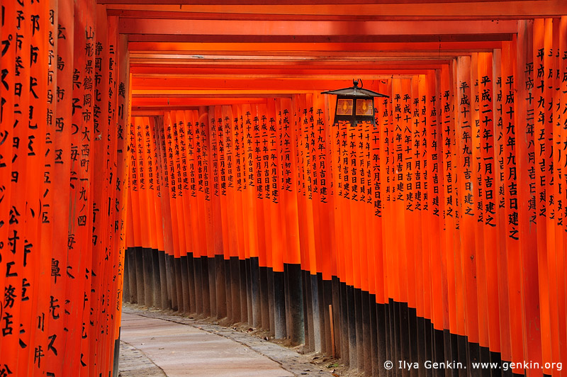 japan stock photography | Ten Thousands of Red Torii Gates at Fushimi Inari Shrine, Kyoto, Kansai, Honshu, Japan, Image ID JP-KYOTO-0011
