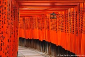 japan stock photography | Ten Thousands of Red Torii Gates at Fushimi Inari Shrine, Kyoto, Kansai, Honshu, Japan, Image ID JP-KYOTO-0011. Fushimi Inari Taisha Shrine in Kyoto is famous for the countless vermilion red Torii gates. The Torii gates are donations from companies, individuals or families and lead up to the main shrine at the top of the hill. Fushimi Inari Shrine is one of Kyoto's landmarks and has been featured in countless movies as backdrop. The most well known movie is Memoirs of a Geisha. A torii is a traditional Japanese gate commonly found at the entry to a Shinto shrine. The basic structure of a torii is two columns that are topped with a horizontal rail. Slightly below the top rail is a second horizontal rail. A Torii Gate is literally a 'place where birds rest'. Torii are traditionally made from wood and are usually painted vermilion red.