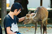 japan stock photography | Tourist is Patting a Miyajima Deer, Miyajima, Honshu, Japan, Image ID JPMI0012.