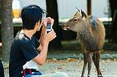 japan stock photography | Tourist Photographing a Miyajima Deer, Miyajima, Honshu, Japan, Image ID JPMI0013.