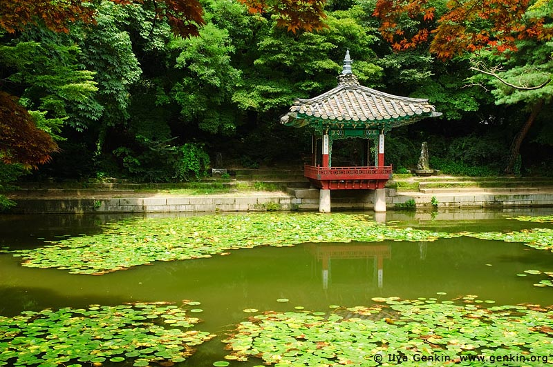 korea stock photography | Aeryeonji Pond and Aeryeonjeong Pavilion at Changdeokgung Palace in Seoul, South Korea, Jongno-gu, Seoul, South Korea, Image ID KR-SEOUL-CHANGDEOKGUNG-0019