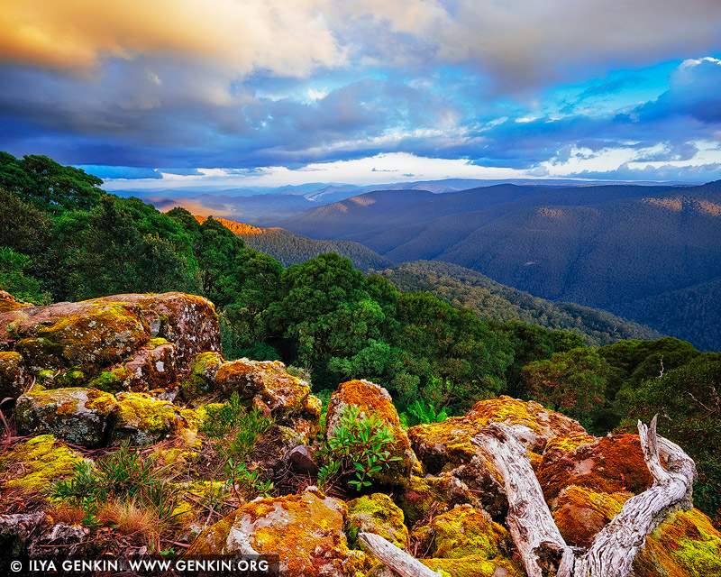 landscapes stock photography | Barrington Tops National Park at Sunset, View from Thunderbolt Lookout, NSW, Australia, Image ID AU-NSW-BARRINGTON-TOPS-0001