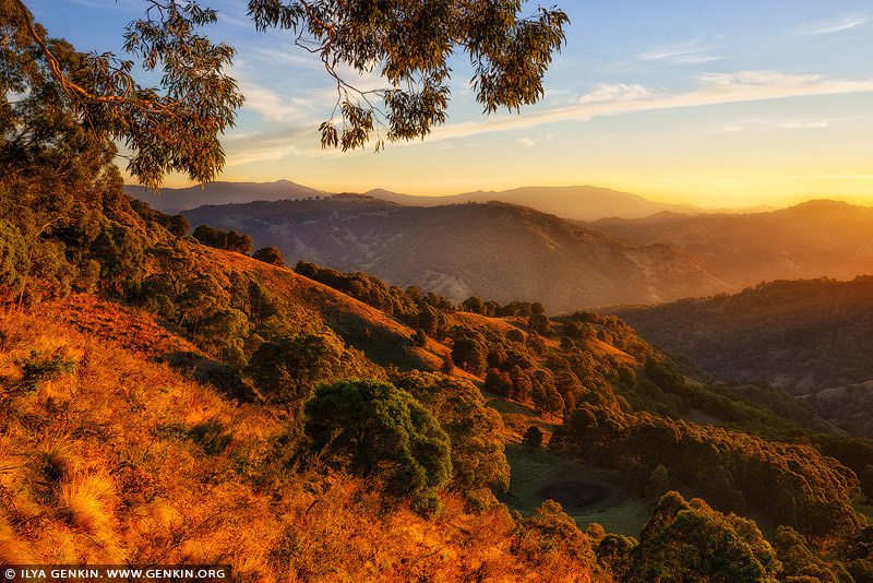 landscapes stock photography | Golden Sunrise in Barrington Tops, Gologolies Lookout, Barrington Tops, NSW, Australia, Image ID AU-NSW-BARRINGTON-TOPS-0003