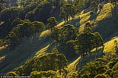 landscapes stock photography | Steep Hills With Trees, Gologolies Lookout, Barrington Tops, NSW, Australia, Image ID AU-NSW-BARRINGTON-TOPS-0004. Steep hills with trees in evening light in Barrington Tops National Park, NSW, Australia.