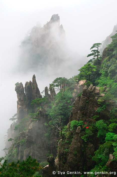 landscapes stock photography | Huangshan Mountains in Clouds, Huangshan (Yellow Mountains), China, Image ID CHINA-HUANGSHAN-0003