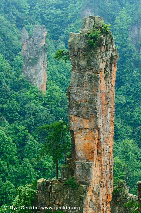 landscapes stock photography | Zhangjiajie Mountains, Tianzi Mountain Nature Reserve, Zhangjiajie National Park, Hunan, China