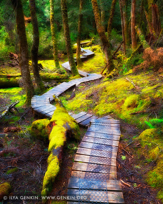 landscapes stock photography | Enchanted Walk, Cradle Mountain National Park, Tasmania, Australia