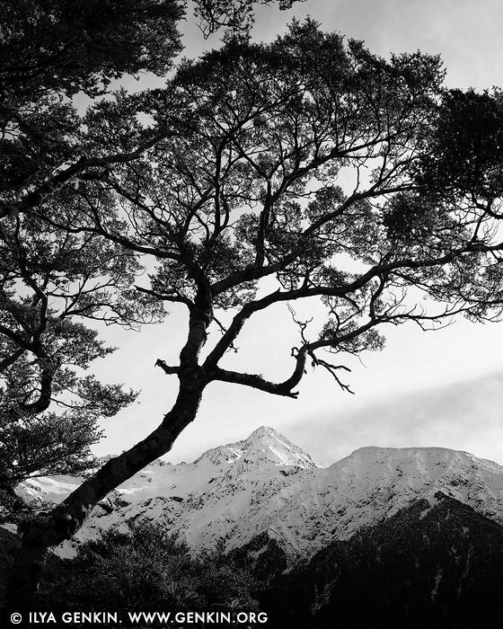 landscapes stock photography | Mount Rolleston, Arthur's Pass, Canterbury Region, South Island, New Zealand, Image ID NZ-MOUNT-ROLLESTON-0001