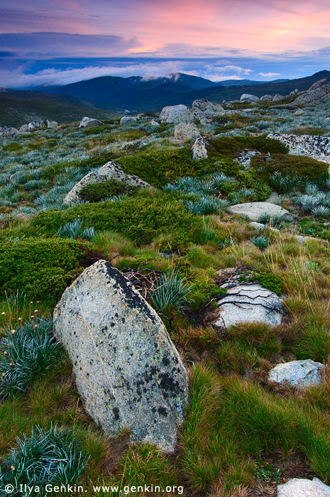 landscapes stock photography | Sunrise in the Snowy Mountains, Kosciusko National Park, Snowy Mountains, NSW, Australia, Image ID AU-KOSCIUSKO-0003