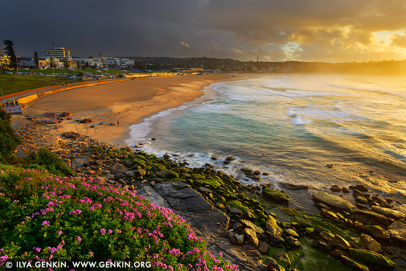 landscapes stock photography | Stormy Sunrise at Bondi Beach, Sydney, NSW, Australia