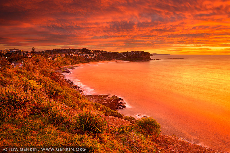Bungan Beach At Sunrise Image