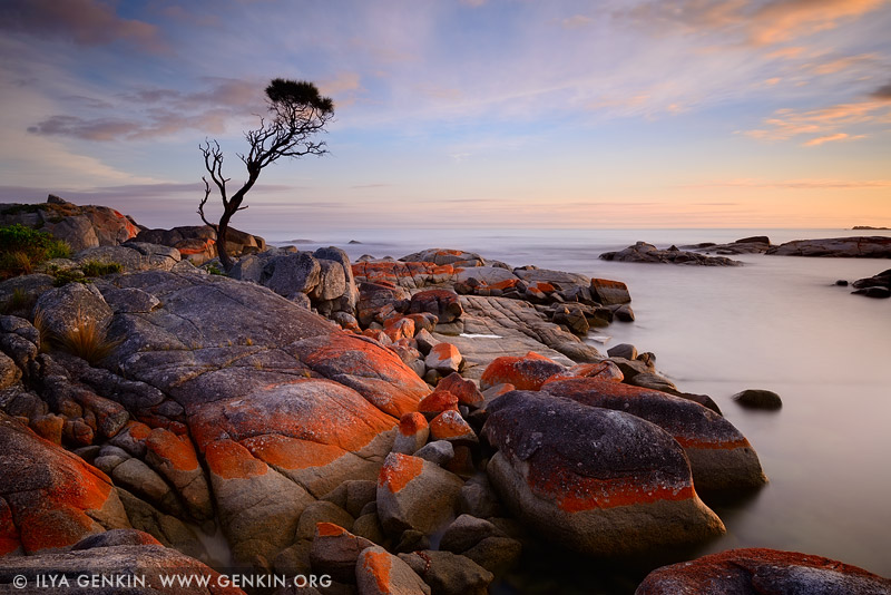 landscapes stock photography | Bay of Fires at Sunrise, Binalong Bay, Tasmania (TAS), Australia, Image ID TAS-BAY-OF-FIRES-0001