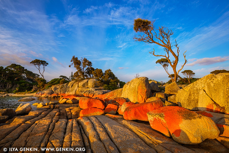landscapes stock photography | Sunrise at Binalong Bay, Bay of Fires, Tasmania (TAS), Australia, Image ID TAS-BAY-OF-FIRES-0003