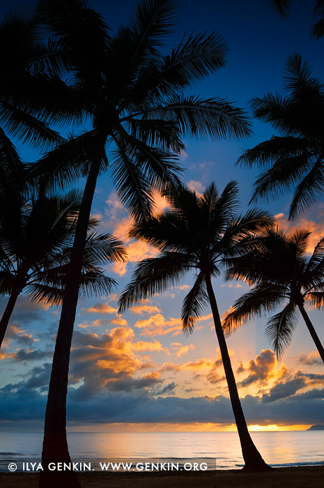 landscapes stock photography | Vivid Sunrise at Palm Cove, Cairns, Queensland (QLD), Australia, Image ID PALM-COVE-QLD-AU-0004