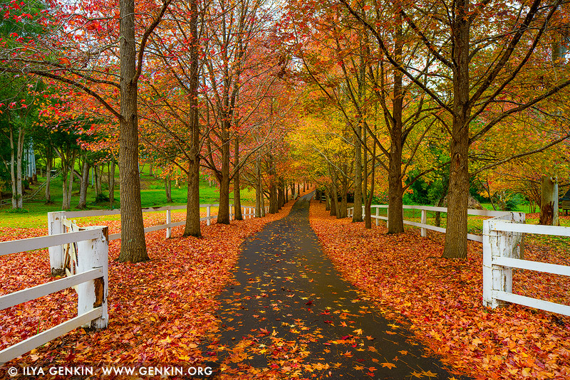 landscapes stock photography | Autumn in Alley, Matcham, Central Coast, NSW, Australia, Image ID AU-MATCHAM-AUTUMN-0002