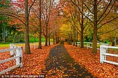 landscapes stock photography | Autumn in Alley, Matcham, Central Coast, NSW, Australia, Image ID AU-MATCHAM-AUTUMN-0002. A beautiful private road in Matcham on the Central Coast of NSW, Australia dressed in stunning Autumn colours.