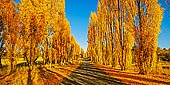 landscapes stock photography | Autumn Poplars at Meadow Flat, Central Tablelands, NSW, Australia, Image ID AU-MEADOW-FLAT-AUTUMN-0002. A beautiful old Mid-Western Highway at Meadow Flat in the NSW Central Tablelands with golden poplars in Autumn.