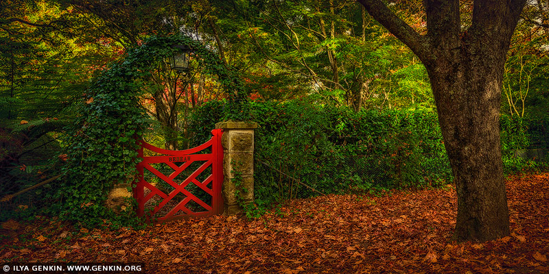landscapes stock photography | The Little Red Gate At Bebeah Gardens In Autumn, Mount Wilson, Blue Mountains National Park, NSW, Australia, Image ID AU-MOUNT-WILSON-AUTUMN-0006