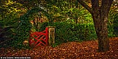 landscapes stock photography | The Little Red Gate At Bebeah Gardens In Autumn, Mount Wilson, Blue Mountains National Park, NSW, Australia, Image ID AU-MOUNT-WILSON-AUTUMN-0006. This little red gate at Bebeah Gardens in Mount Wilson, Blue Mountains, NSW, Australia is probably the most photographed gates in Australia. The parklands were originally built by Edward Cox in 1880. Sprawling over many acres the garden includes various vistas of formal country garden. The name 'Bebeah' is believed to be an Aboriginal word meaning 'a place where stone axes are found'.