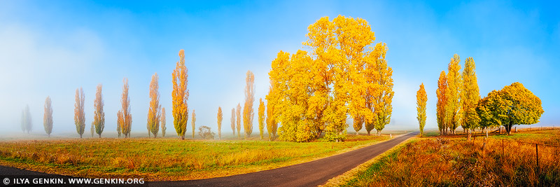 landscapes stock photography | Foggy Autumn Morning near Uralla, Northern Tablelands, New England, NSW, Australia, Image ID AU-NEW-ENGLAND-AUTUMN-0001