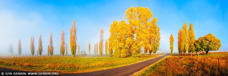 landscapes stock photography | Foggy Autumn Morning near Uralla, Northern Tablelands, New England, NSW, Australia, Image ID AU-NEW-ENGLAND-AUTUMN-0001