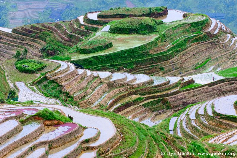 terraces in china. rice terraces in China and