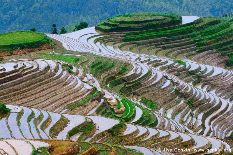 landscapes stock photography | Dragon's Backbone Rice Terraces, Longji, Longsheng, Guangxi, China, Image ID CHINA-LONGSHENG-0008