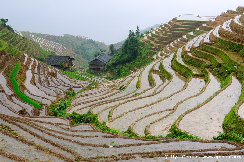landscapes stock photography | Longsheng Rice Terraces, Longji, Longsheng, Guangxi, China, Image ID CHINA-LONGSHENG-0009