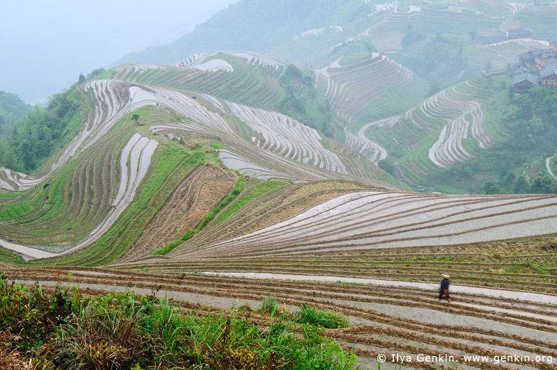 landscapes stock photography | Longji Rice Terrace Fields, Longsheng, Guangxi, China, Image ID CHINA-LONGSHENG-0010
