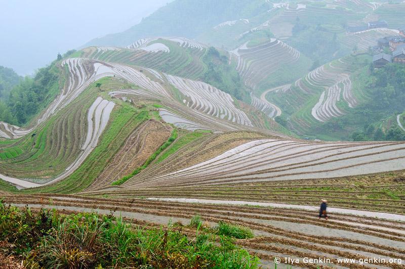 landscapes stock photography | Longji Rice Terrace Fields, Longsheng, Guangxi, China, Image ID CHINA-LONGSHENG-0010