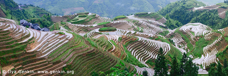landscapes stock photography | Longji Rice Terrace Fields, Longsheng, Guangxi, China, Image ID CHINA-LONGSHENG-0011