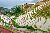 landscapes stock photography | Longji Rice Terrace Fields, Longsheng, Guangxi, China, Image ID CHINA-LONGSHENG-0012. The Longji Rice Terraces (Dragon's Backbone Rice Terraces) covers an area of 66 square kilometers (about 16308 acres) and spans an altitude between 300 meters (about 984 feet) and 1100 meters (about 3608 feet). It is said, 'Where there is soil, there is a terrace', be it in the valley, with swift flowing river to the mountains summit with its swirling cloud cover, or from bordering verdant forest to the cliff walls.