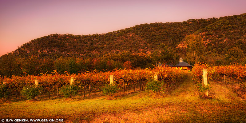 landscapes stock photography | Autumn Colours of Vineyard, Broke, Hunter Valley, NSW, Australia