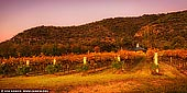 landscapes stock photography | Autumn Colours of Vineyard, Broke, Hunter Valley, NSW, Australia, Image ID AU-HUNTER-VALLEY-0001. A glorious sunrise in autumn created a surreal light over the scenery and a vineyard near Broke, Hunter Valley, NSW, Australia. During fall many things change, including the vibrancy of a sunset or the foliage turns to shades of red, orange and yellow. The nights become cooler which in some ways revitalises the scenery and crisps things up. Even the grapevines at one of the many vineyards of the Hunter Valley take on a different appearance as the final weeks of fruit bearing come to a close.
