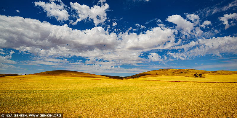landscapes stock photography | Rolling Hills of Clare Valley, South Australia (SA), Australia, Image ID AU-CLARE-VALLEY-0001
